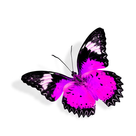biblis: Pink  butterfly flying