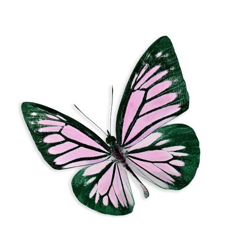 Beautiful Pink Butterfly Flying isolated on white background with soft shadow.jpg photo