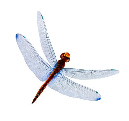 青い翼の白い背景で隔離のトンボ