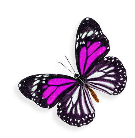 pink butterfly: Flying Pink Butterfly with soft shadow beneath on white background