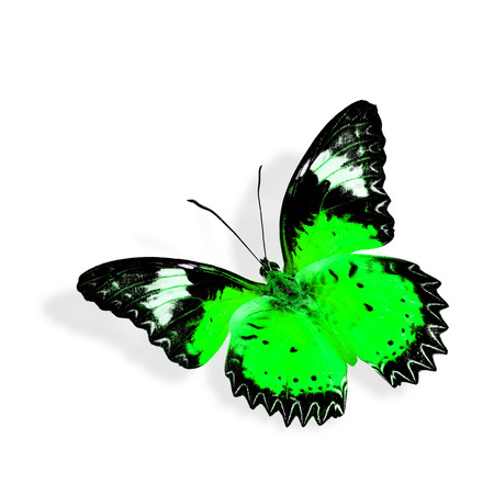 biblis: Green butterfly flying Stock Photo