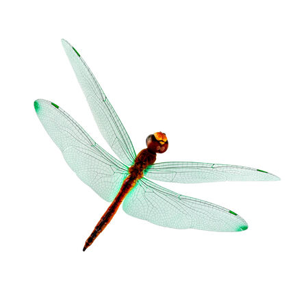 Green wings Dragonfly isolated on white background photo
