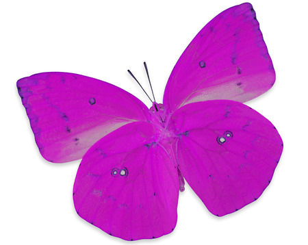 pink cruiser: Pink Butterfly (Lemon Emigran) color transparency profile isolated on white background
