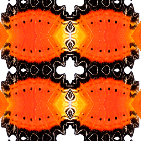 biblis: Background Pattern made from Red Lacewing butterfly wing skin
