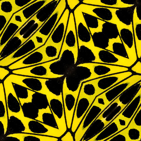 biblis: Texture of yellow and black pattern made from bird wing butterfly wing
