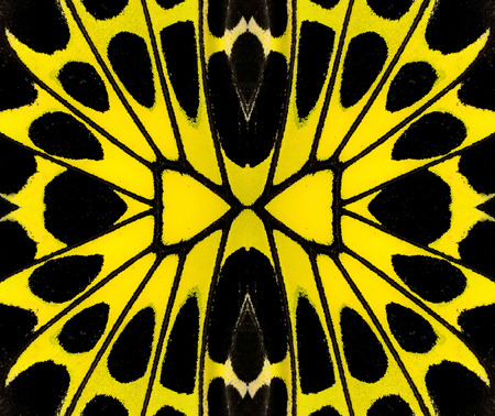 biblis: Yellow and Black background pattern made from bird wing butterfly wing skin Stock Photo