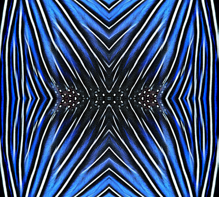 bird feathers: Beautiful pattern made from blue and black bird feathers for background and design