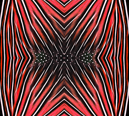 bird feathers: Beautiful pattern made from red bird feathers for background and design