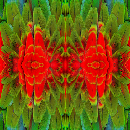 bird feathers: Beautiful Background Pattern made from Red ang Green Macaw bird feathers Stock Photo