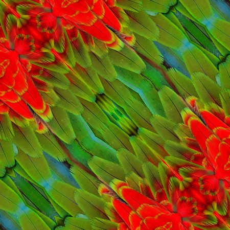bird feathers: Close up of Pattern made from Red ang Green Macaw bird feathers