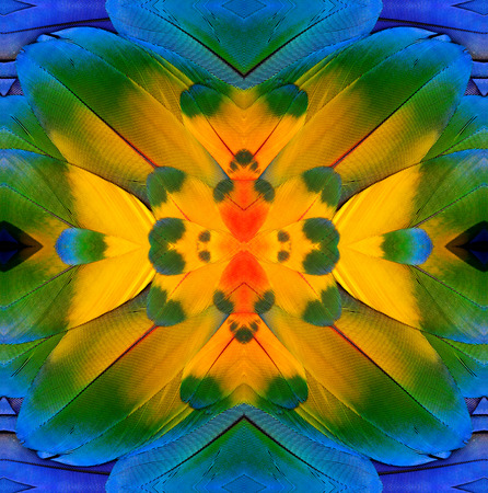 bird feathers: Clsoe up of Blue and Yellow pattern made from blue and gold macaw bird feathers