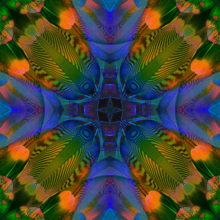 bird feathers: Close up of Colorful Background Pattern made from Macaw bird feathers