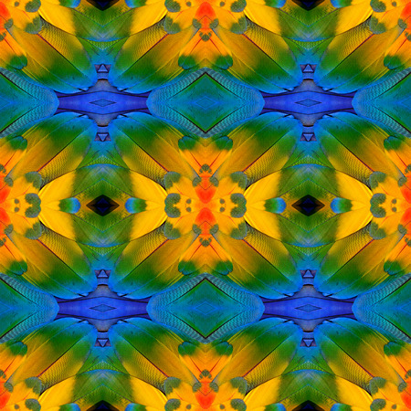 bird feathers: Great colorful background pattern made from blue and gold macaw bird feathers