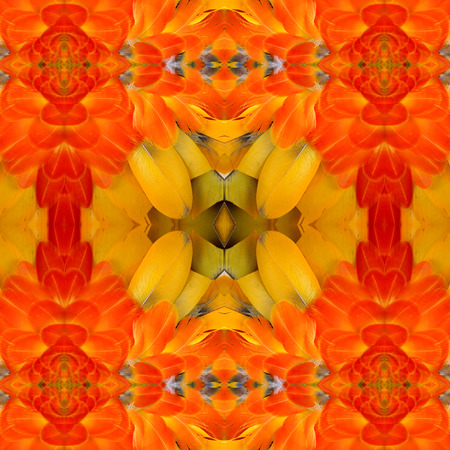 Vivid Orange Background Texture made of Harliquin Macaws feathers