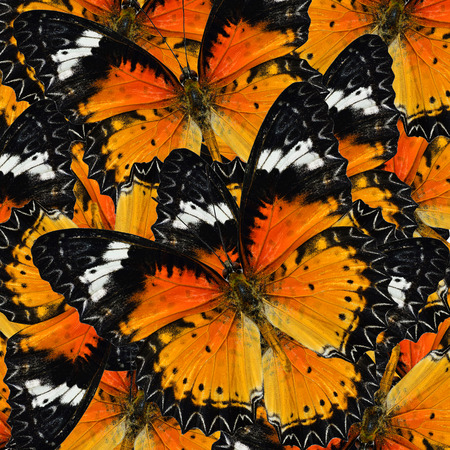 lacewing: Pile up of many beautiful Malay Lacewing Butterflies in full framing background texture