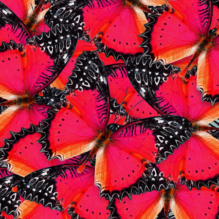 lacewing: Beautiful background pattern made of Red Lacewing butterflies in fancy color Stock Photo