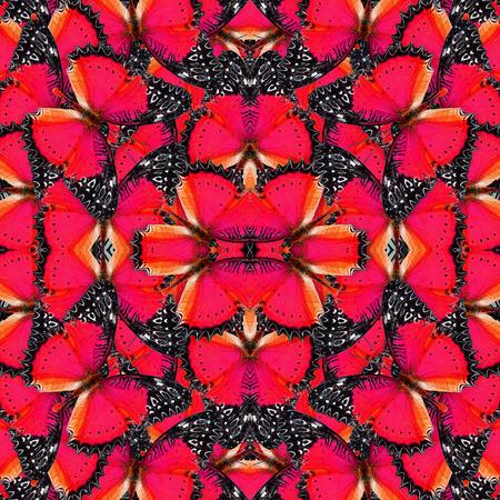 chrysope: Belle de motif de fond rouge en papillons Rouge chrysope Banque d'images