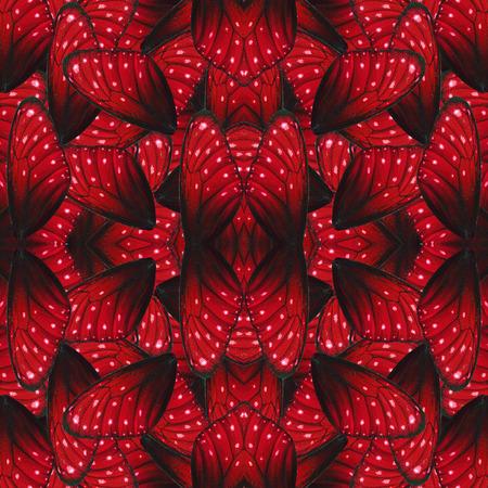 background red: Modelo hermoso fondo rojo hecho del ala textura de la piel de la raya azul de la mariposa
