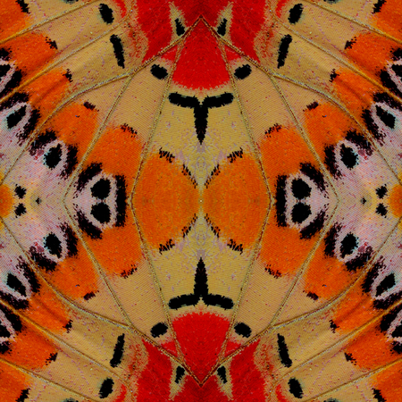 biblis: Beautiful orange red and yellow background pattern made from Leopard Lacewing butterfly wing