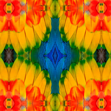 Beautiful Red Yellow and Blue background textures made of Scarlet Macaw birds feathers