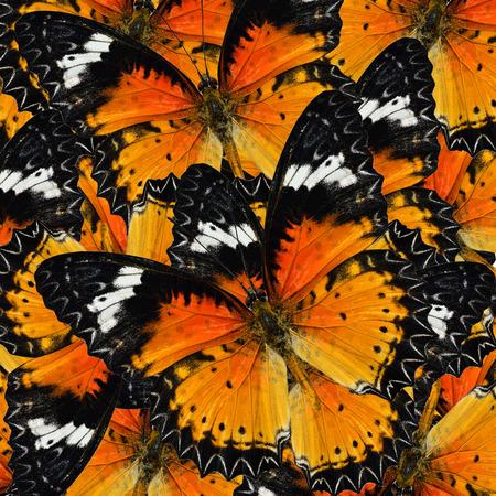 chrysope: Pile de beaucoup de belles malais chrysope Papillons en pleine cadrage texture de fond Banque d'images