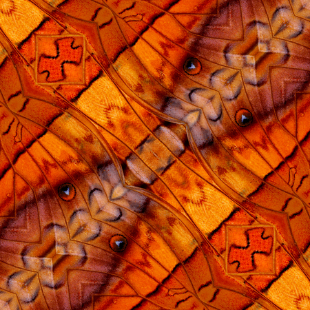 commander: Beautiful background pattern made of common commander butterfly wing texture