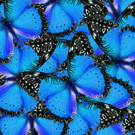 lacewing: Beautiful blue and black background pattern made of Red Lacewing butterflies in fancy color