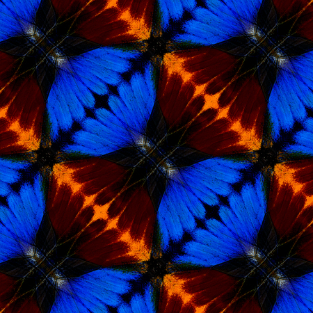 lacewing: Beautiful Blue and Red Background Pattern made of butterfly wings texture Stock Photo