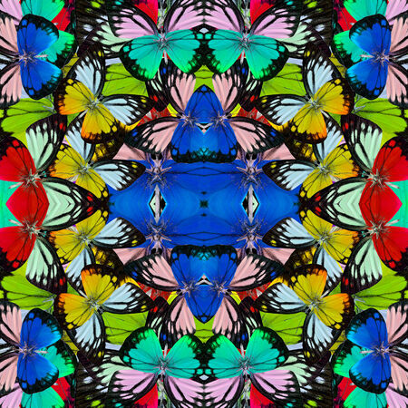 consolidated: Beautiful multicolor butterflies consolidated into a great backgroun patterns Stock Photo