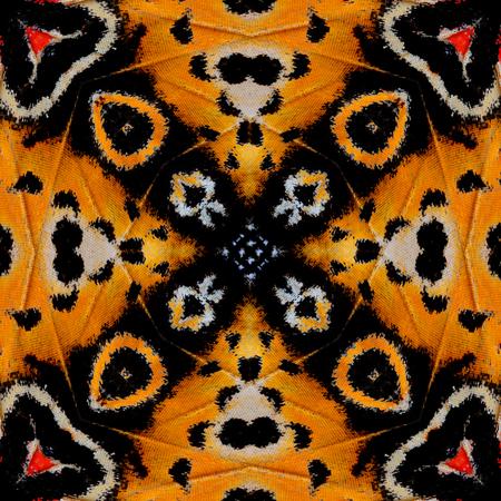chrysope: Belle de noir et jaune motif de fond fabriqu� � partir de l�opard chrysopes ailes de papillon texture Banque d'images