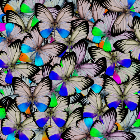 consolidated: Beautiful of blue and others butterflies consolidated into the great backgroun patterns