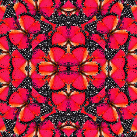 lacewing: Beautiful of red background pattern made of Red Lacewing butterflies Stock Photo