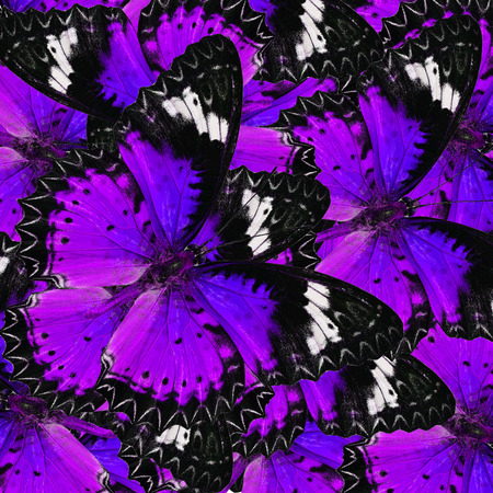 lacewing: beautifu sweet purple butterflies in full framing background texture Stock Photo