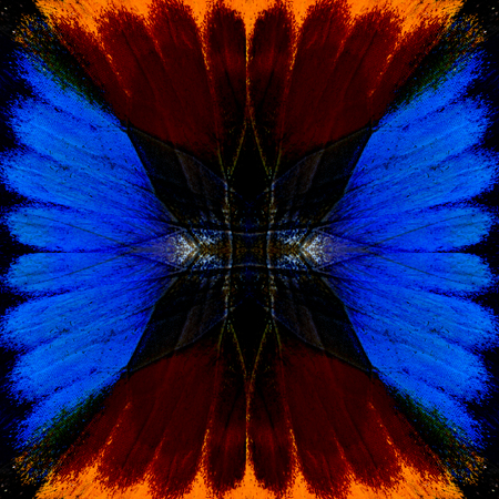 lacewing: Beautiful Blue and burned red background pattern made from butterflys wing texture