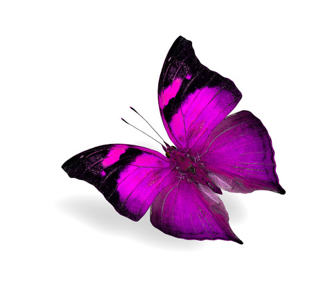 pink butterfly: Beautiful flying pink butterfly isolated on white background with soft shadow Stock Photo