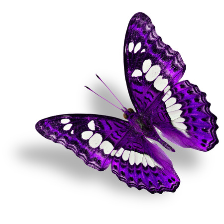 Beautiful flying purple Butterfly isolated on white background with soft shadow Фото со стока