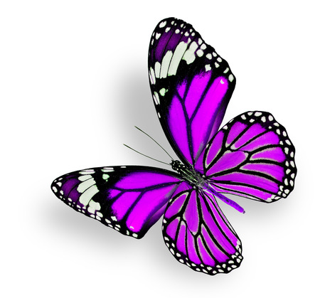 purple butterfly: Beautiful Flying Purple Butterfly isolated on white background Stock Photo