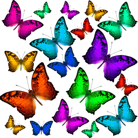 vagrant: Beautiful Flying Vagrant Butterflies in colorful scheme Stock Photo