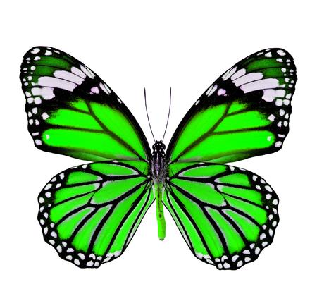 mariposa verde: Mariposa verde hermosa en colores de fantas�a aislado en fondo blanco