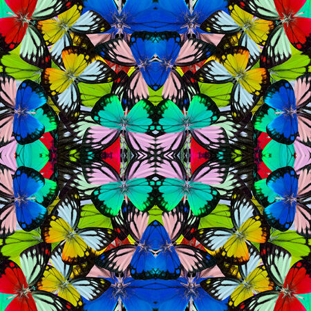 consolidated: Beautiful of multicolor butterflies consolidated into a great backgroun patterns