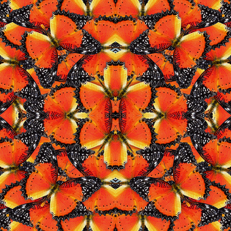 lacewing: Beautiful of orange and black background pattern made of Red Lacewing butterflies Stock Photo