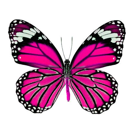 papillon rose: Beau papillon rose de couleur fantaisie isolé sur fond blanc