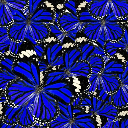 papilio demoleus: Blue Background Texture made of Common Tiger Butterflies in fancy color and patterns Stock Photo