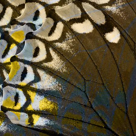 Fermez rapproché Fond Brown Texture en Lesser Zebra ailes de papillon Banque d'images