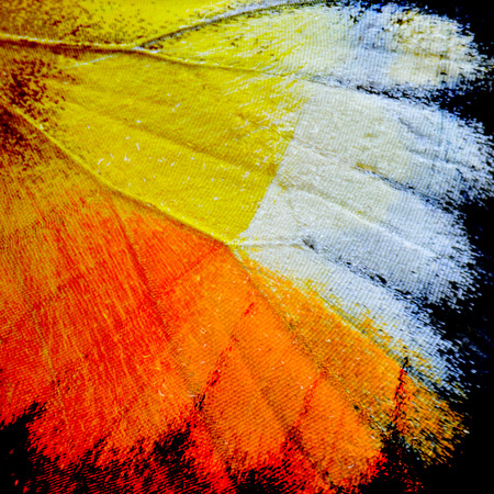 lacewing: Close up of beautiful Yellow and Orange Background pattern made of Butterflys wing skin Stock Photo