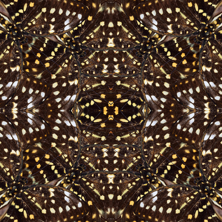 archduke: Close up of seamless yellow and brown camouflage texture made of Great Archduke Butterflies
