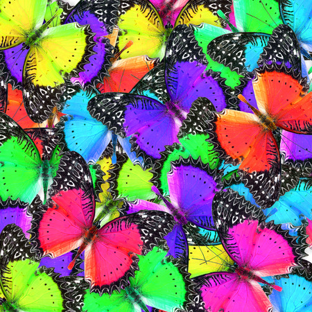 lacewing: Exotic background texture made of beautiful red lacewing butterfies in various shades