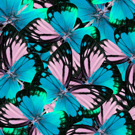 lacewing: Exotic Blue Butterflies piled up in to the beautiful background texture