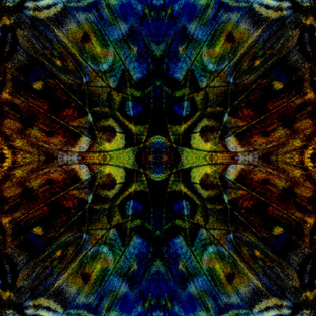 vagrant: Exotic dark blue and yellow background texture made of Vagrant Butterfly wing skin Stock Photo