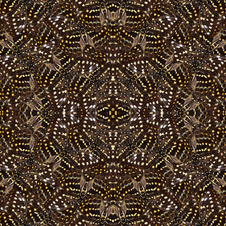 archduke: Exotic of seamless yellow and brown camouflage texture made of Great Archduke Butterflies